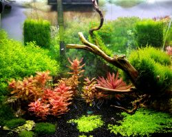 Setting Up A new Dirted Plant Tank Episode 5: Completion of New Setup