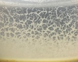 Complete Guide to Culturing Microworms